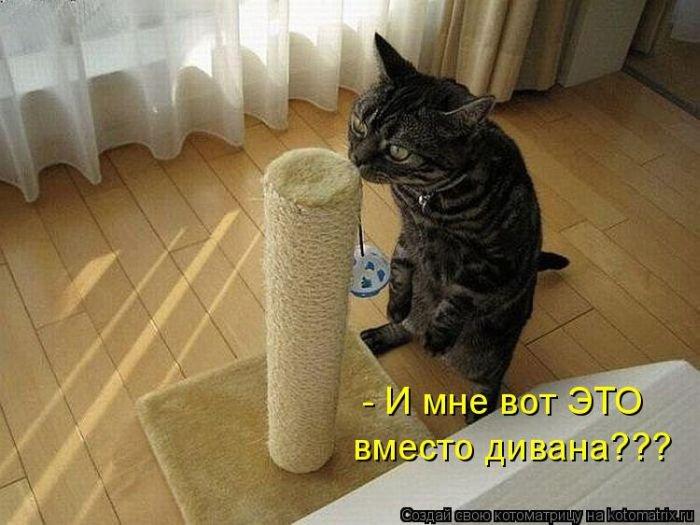 http://xaxa-net.ru/uploads/posts/2015-02/1423912618_420150214-smeshnye-kotomatricy.jpg