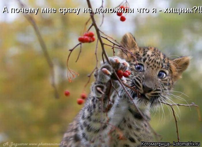 Прикольные котоматрицы для настроения. Про животных