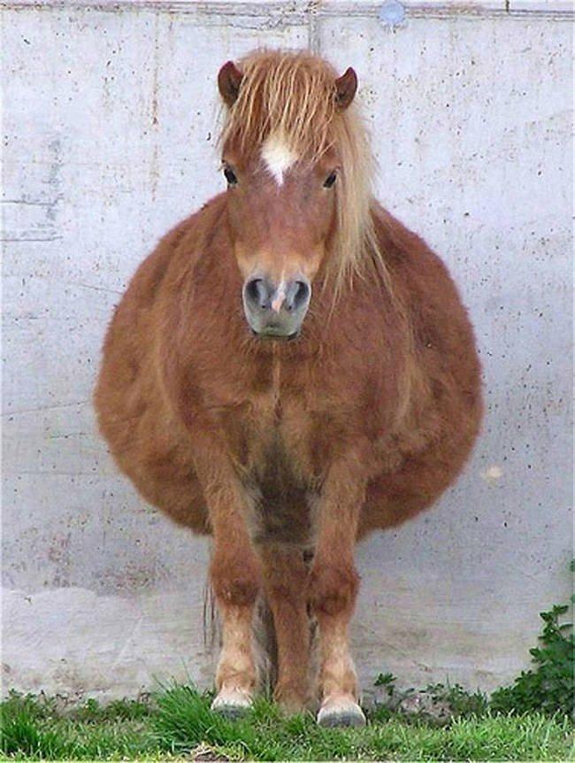 Прикольные беременные животные. Подборка фото