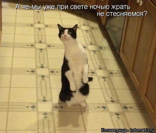 Смешные котоматрицы. Прикольные кошки и коты
