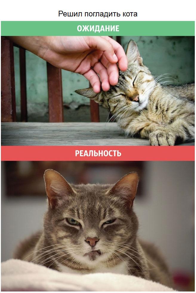 Приколы про кошек - ожидание и реальность