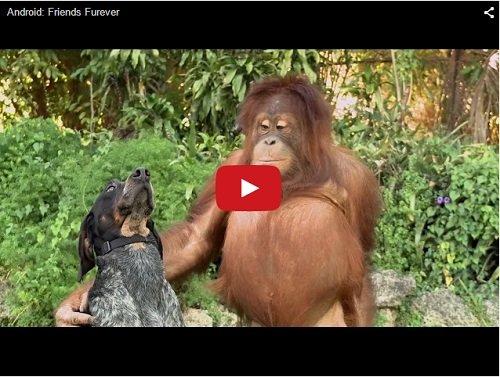 Друзья навсегда. Видео про животных