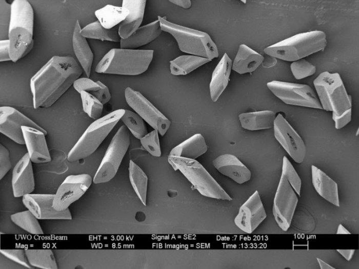 Как выглядят обычные вещи под микроскопом