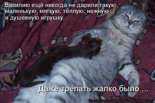 Котоприкольные котоматрицы. Упоротый пост