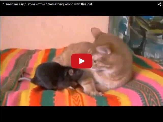 Что-то не так с этим котом. Кот и мышь