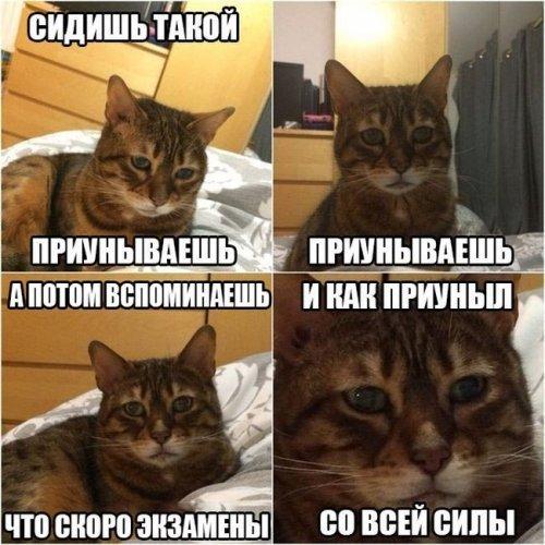 Подборка приколов и баянов. Картинка дня