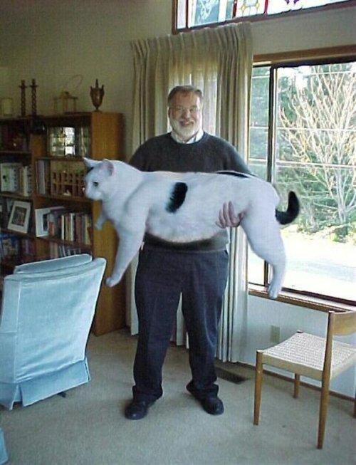 Большие кошки. Про животных