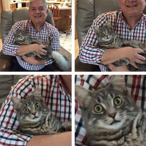 Новые фотоприколы с кошками. Про животных