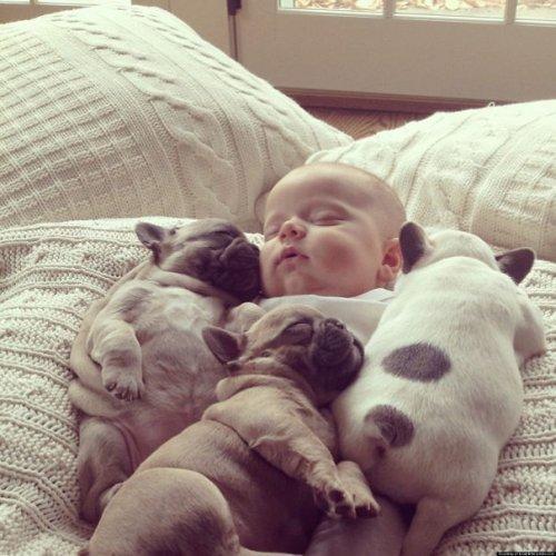 Милые щенки бульдога. Прикольные собаки