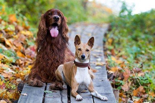 Дружба собак. Фотографии про животных