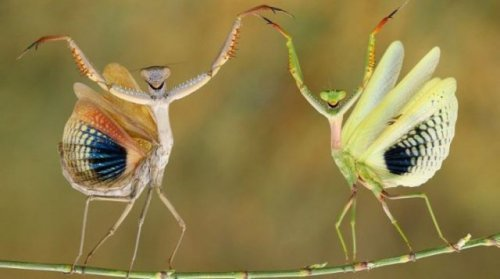 Забавные дикие зверушки. Фото смешных животных