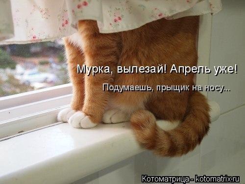Новая майская котоматрица. Приколы про котиков