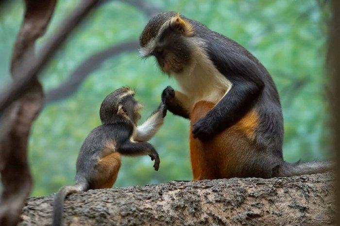 Трогательные фотографии с животными