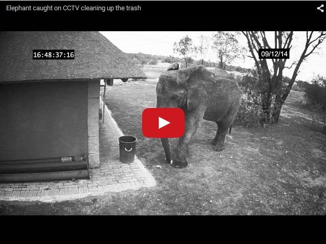 культурный слон