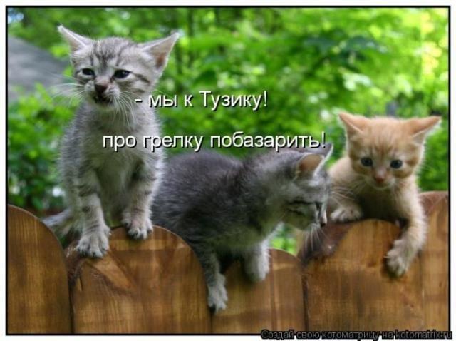 Весёлые котоматрицы для настроения. Свежие приколы
