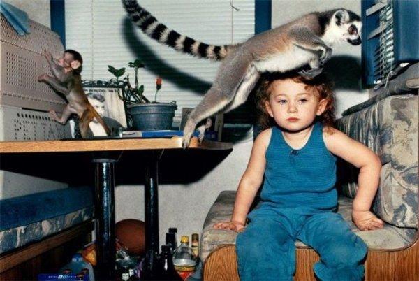 Фотобомбы с животными. Прикольные зверята