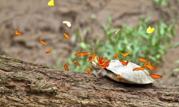 Красивые фото с бабочками. Прекрасные снимки