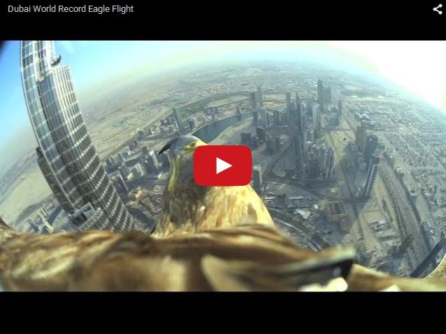 Полет с башни Бурдж-Халифа в Дубае глазами орла. Захватывающее видео с высоты 820 метров.