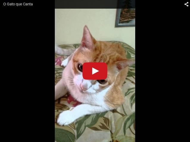 Кот поет дуэтом с хозяином