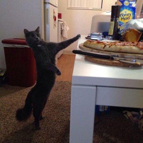 Хорошие котоприколы. Весёлые коты