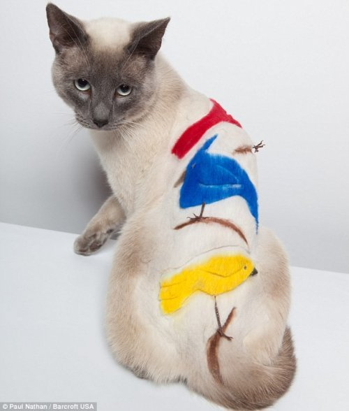 Кошки со стрижками. Смешные коты