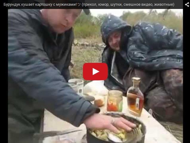 Бурундук ест с охотниками картошку
