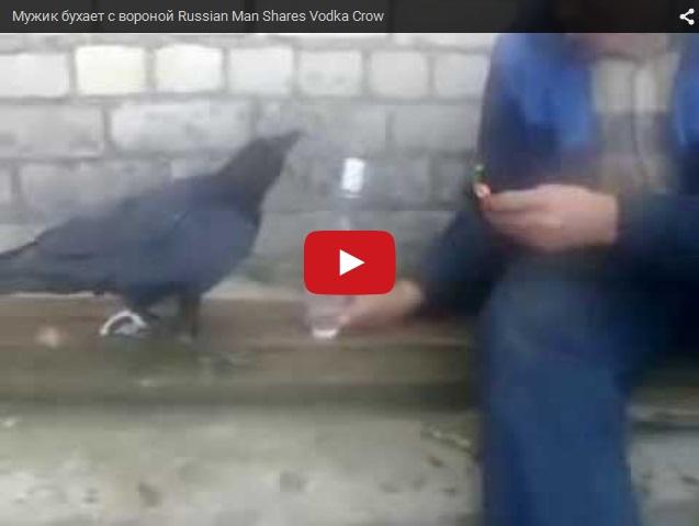 Ворона бухает с мужиком