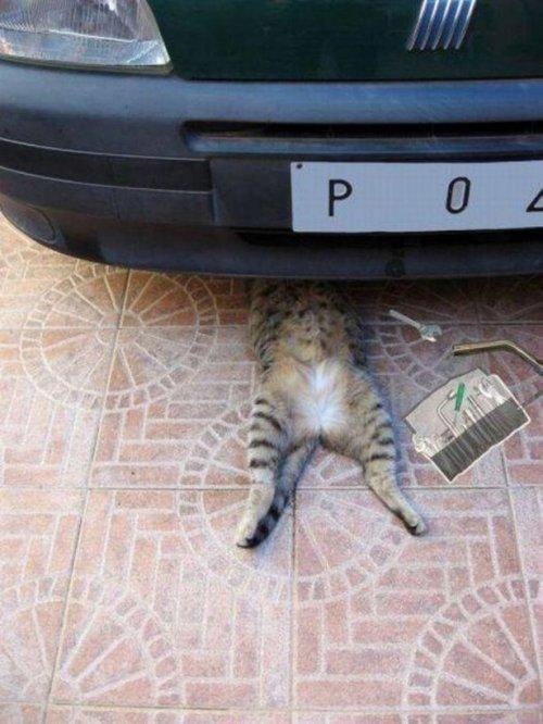 Новые котоприкольные картинки. Смешные коты
