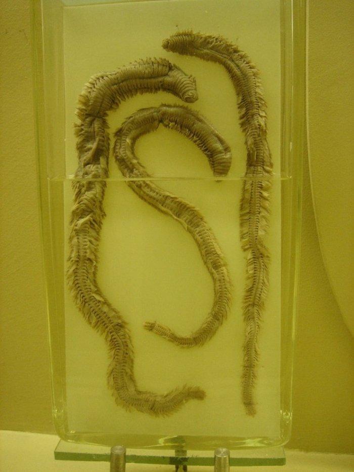 Скелеты животных в музее. Интересные картинки