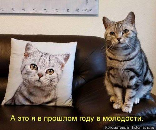 Весёлая котоматрица. Картинки про кошек