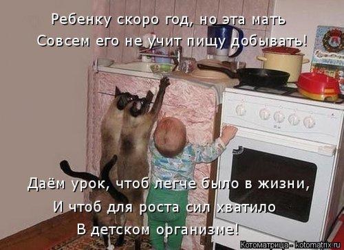 Пост свежих котоматриц. Смешные коты