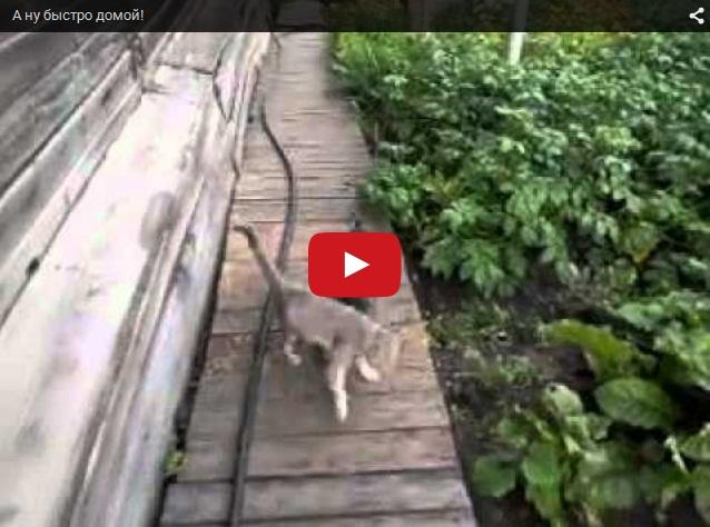 Дорога домой - собака несет кота