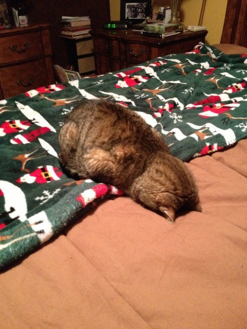 Кошачьи эмоции. Смешные коты