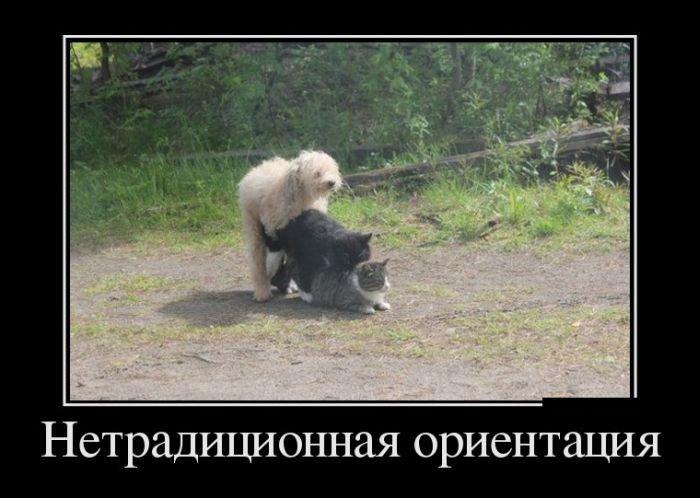 Прикольные и свежие русские демотиваторы. Забавные картинки