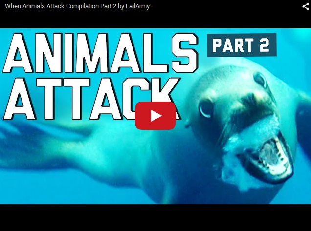 Дикие животные нападают на людей