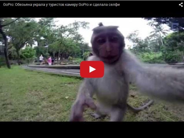 Умная обезьяна делает селфи