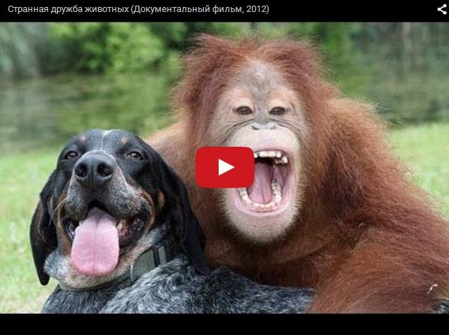 Необычная дружба разных животных
