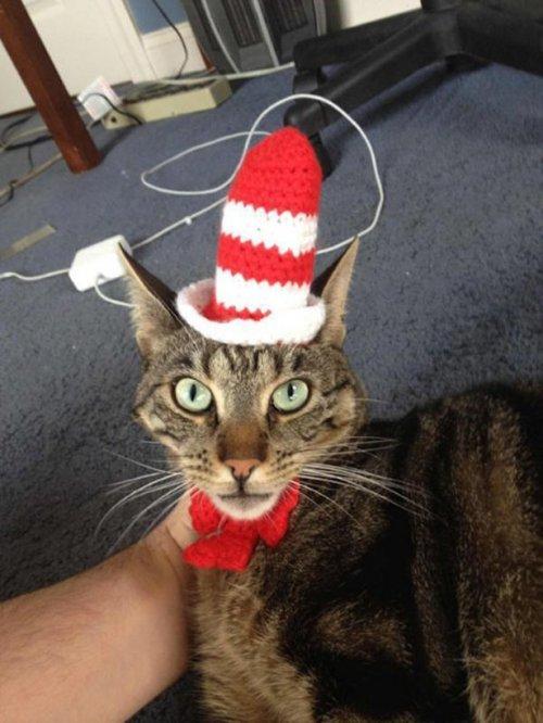 Кошачий косплей. Смешные коты