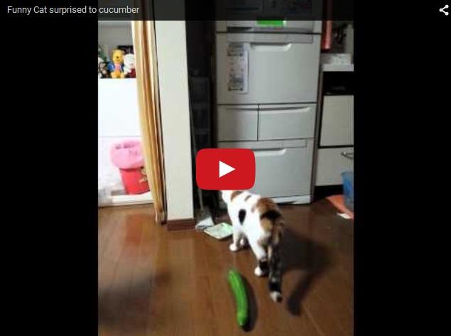 Кот против огурца. Неподдельный испуг