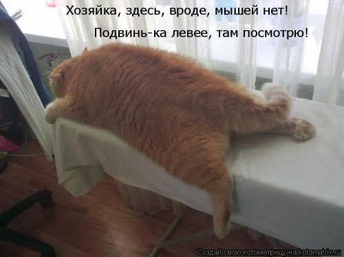 http://xaxa-net.ru/uploads/posts/2015-07/1437679400_2-prikoly-kotomatricy_xaxa-net.ru.jpg