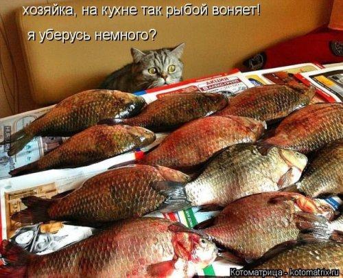 Новая котоматрица для любителей котиков. Смешные коты