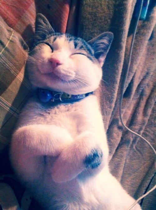 Самые позитивные кошки в Интернете