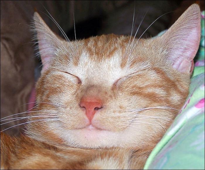 Коты-улыбаки. Смешные животные