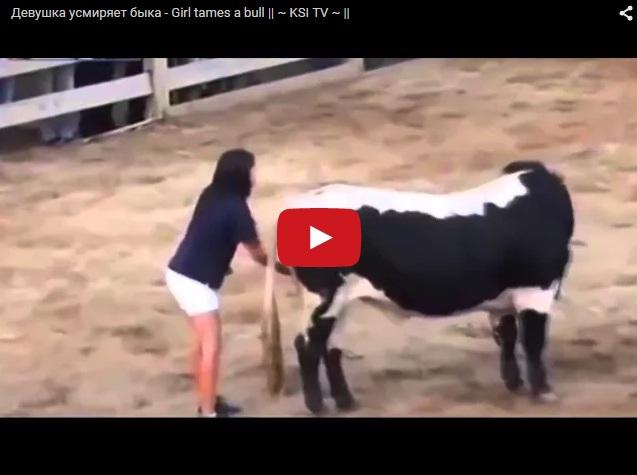 Как усмирить быка
