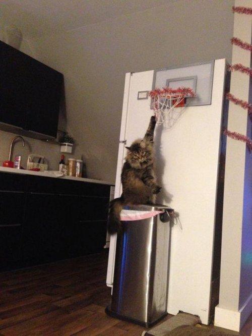 Фотоприколы с кошками. Смешные коты