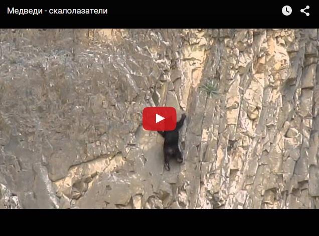 Как медведи лазят по скалам