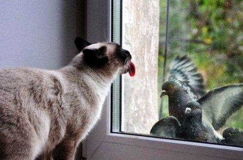 Смешные животные облизывают стекло