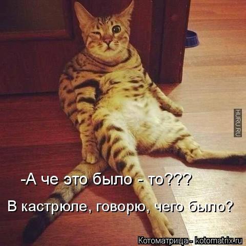 Лучшая котоматрица. Смешные кошки