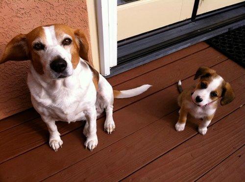 Прикольные собаки и их щенки
