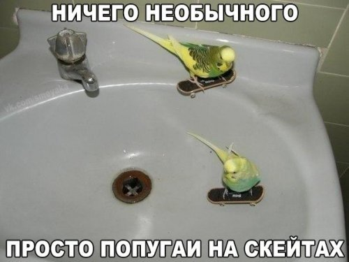 Смешные фотомемы на Хаха-нет.  Прикольные картинки с надписями